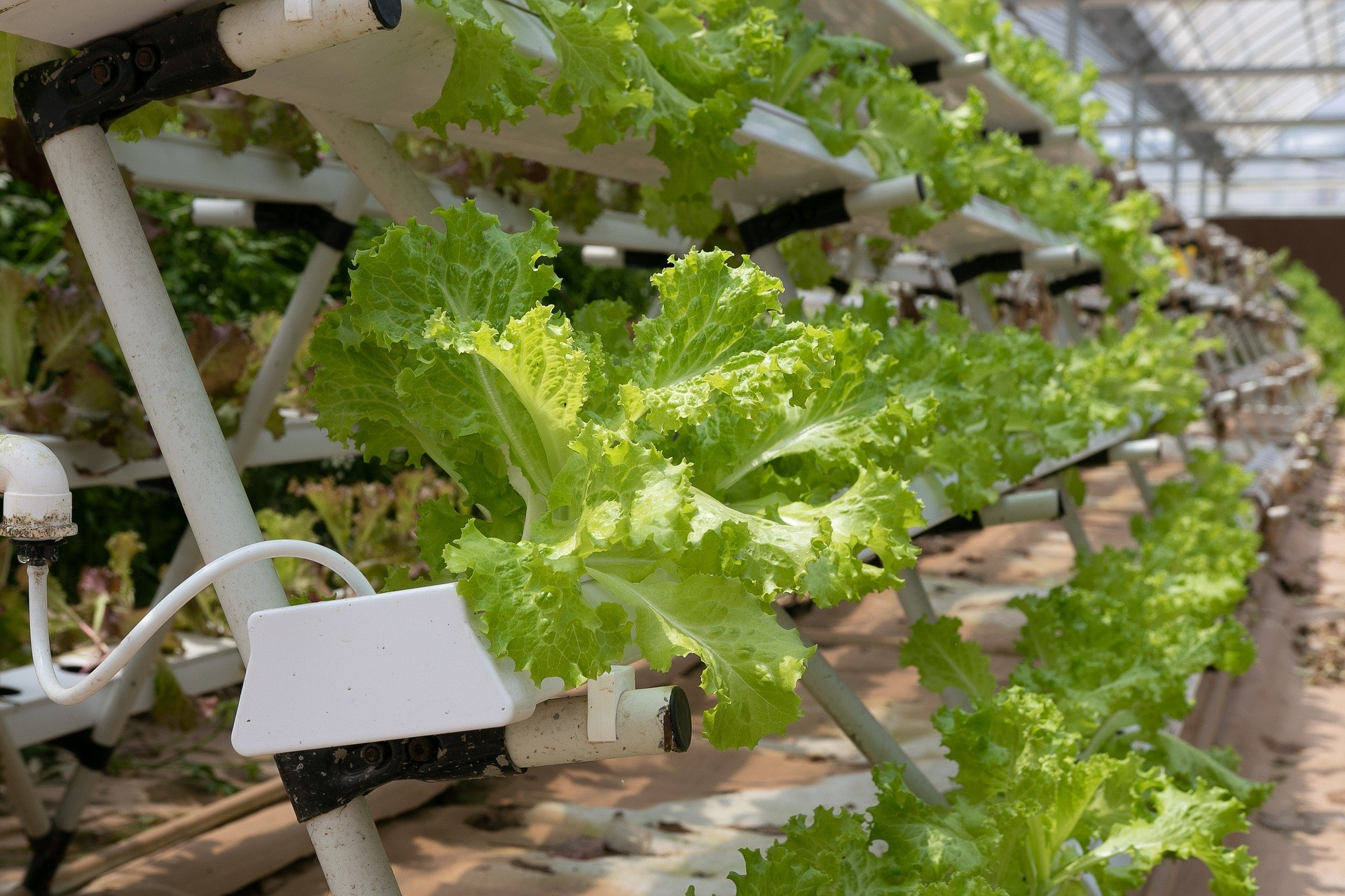 10 Most Profitable Small Businesses - Start vertical farming
